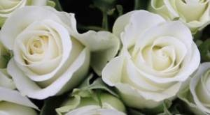 Wedding roses sunrocks_gr
