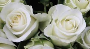 Wedding roses sunrocks_gr
